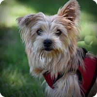 Adopt A Pet :: Tinkerbelle - Boulder, CO