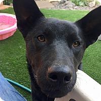 Adopt A Pet :: Teddy - Santa Ana, CA
