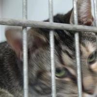 Adopt A Pet :: Samantha - Robinson, IL