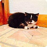 Adopt A Pet :: Orio - Pittstown, NJ