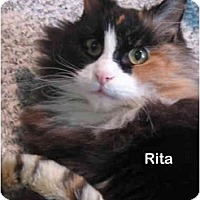 Adopt A Pet :: Rita - Portland, OR