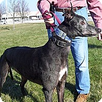 Adopt A Pet :: Ritchie - Fremont, OH