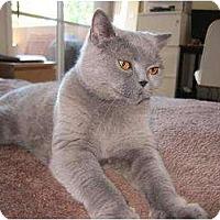 Adopt A Pet :: Katie - Beverly Hills, CA