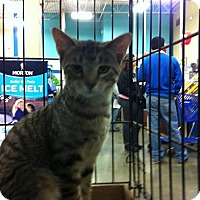 Adopt A Pet :: Billy - Pittstown, NJ