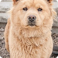Adopt A Pet :: Auggie - Gregory, SD