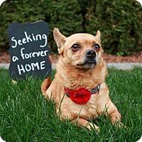 Adopt A Pet :: Pippa - West Richland, WA