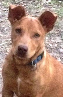 Terrier (Unknown Type, Medium) Mix Dog for adoption in Kilgore, Texas - Carmela