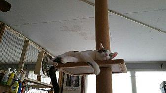 Calico Cat for adoption in Columbia, South Carolina - Skippy