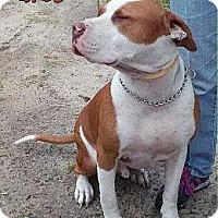 Adopt A Pet :: Biggs - Westminster, MD