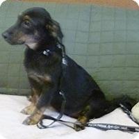 Adopt A Pet :: Loretta Lynn - Livingston, TX