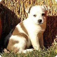 Adopt A Pet :: Katie,Ali,Chloe-Courtesy post - Minneapolis, MN