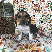 Adopt A Pet :: Victor - Russellville, KY