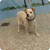 Adopt A Pet :: URGENT ON 7/5  San Bernardino - San Bernardino, CA