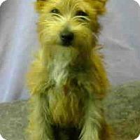 Adopt A Pet :: Albert Norton - Seattle, WA