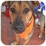 Photo 1 - Shepherd (Unknown Type)/Rottweiler Mix Dog for adoption in Chicago, Illinois - Dave