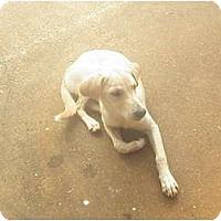 Adopt A Pet :: Cammie - York, SC