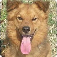 Adopt A Pet :: Elvis - Baltimore, MD