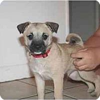 Adopt A Pet :: Dennis - Arlington, TX