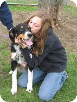 Australian Shepherd/Border Collie Mix Dog for adoption in Canton, Ohio - Zena (cage 26)