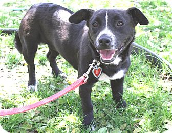 Border Collie/Dachshund Mix Dog for adoption in Yorba Linda, California - Marcy