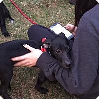Adopt A Pet :: Auggie - Brick, NJ