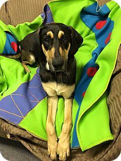 Hound (Unknown Type) Mix Dog for adoption in Glastonbury, Connecticut - Bella