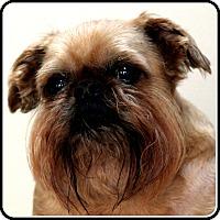 Adopt A Pet :: TINZO - ADOPTION PENDING - Seymour, MO