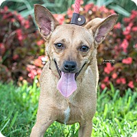Adopt A Pet :: Cash - Gainesville, FL