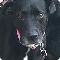 Adopt A Pet :: Eve - calimesa, CA