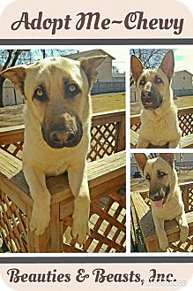 German Shepherd Dog Mix Dog for adoption in Wichita, Kansas - Chewy