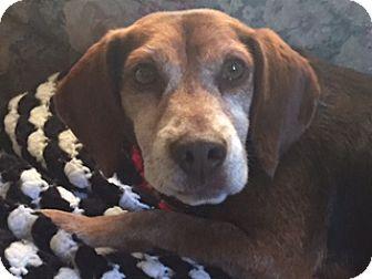 Beagle Mix Dog for adoption in Urbana, Ohio - Arthur Beatty