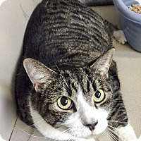 Adopt A Pet :: Nellie - Oakland, CA