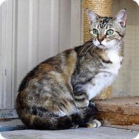 Adopt A Pet :: Aprilia - Van Wert, OH
