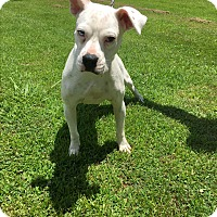 Adopt A Pet :: Jolene*Pending Adoption - Columbia, TN
