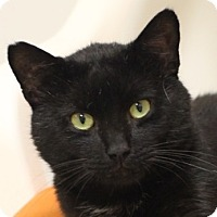 Adopt A Pet :: Kimbo - Norwalk, CT