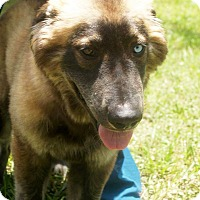 Adopt A Pet :: Lexie - Clearwater, FL