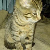 Adopt A Pet :: Cipher - Columbus, OH