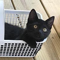 Adopt A Pet :: Rey - Chattanooga, TN