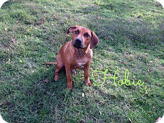 Rhodesian Ridgeback Mix Dog for adoption in Shady Point, Oklahoma - Hobie