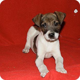 Catahoula Leopard Dog/Hound (Unknown Type) Mix Puppy for adoption in Lufkin, Texas - Olivia