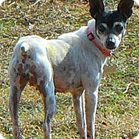 Adopt A Pet :: Sundy Grace - Oklahoma City, OK