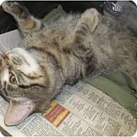 Adopt A Pet :: Windie - Acme, PA