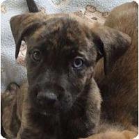 Adopt A Pet :: Alabama - Phoenix, AZ