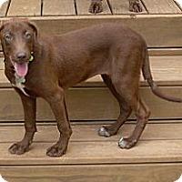 Adopt A Pet :: Kerrie - Cumming, GA