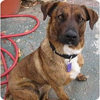 Adopt A Pet :: India - San Diego, CA