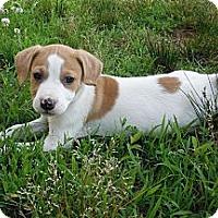 Adopt A Pet :: Juniper~pending - Adamsville, TN
