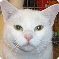 Adopt A Pet :: Snowflake - St. Johnsville, NY