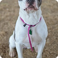 Adopt A Pet :: Tilly - Southampton, PA