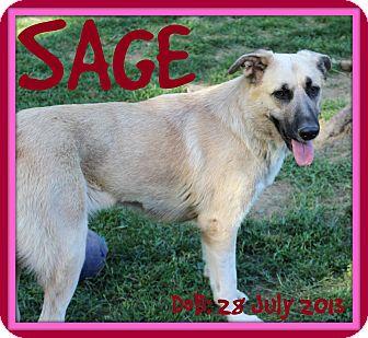 Anatolian Shepherd/Mastiff Mix Dog for adoption in Jersey City, New Jersey - SAGE