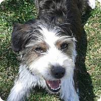 Adopt A Pet :: Skittles-adoption pending - Mississauga, ON